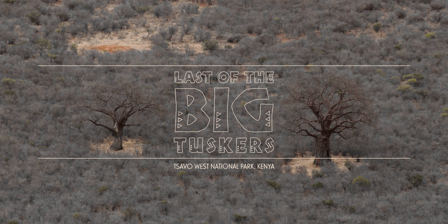 Last of the Big Tuskers – Title spot (Tsavo West National Park) © 2018 Umboko Productions